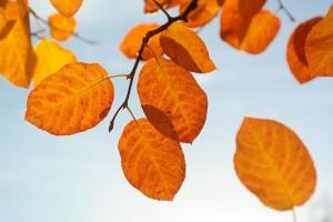 leaves-228111_640