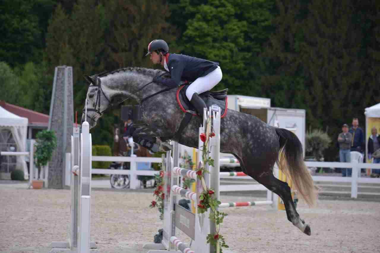 In Sport investieren - Reitpferde