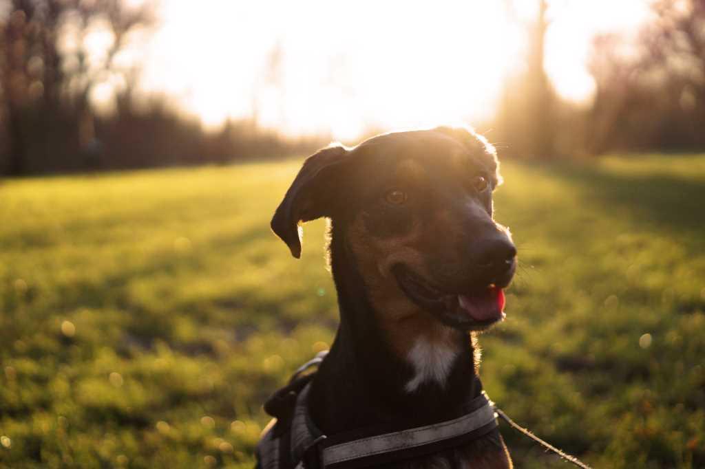 Hundehalterhaftpflichtversicherung - Header